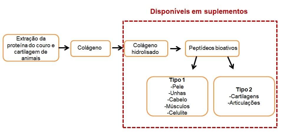 Diagrama da origem da produção do colágeno e tipos de suplementos disponíveis.