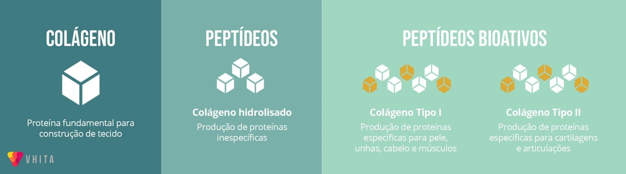 Colageno e peptídeos bioativos de colágeno.