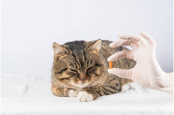 Alimentos ricos em ômega 3 que cães e gatos podem consumir.